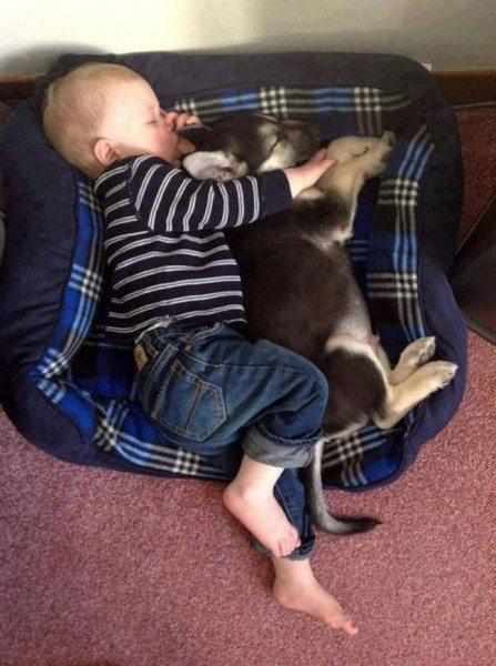bebe y animales2