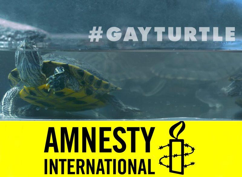 tortuga gay