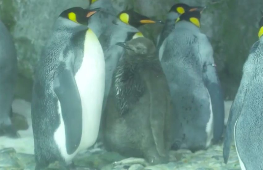 thelma-louise-pingüinas-lesbianas