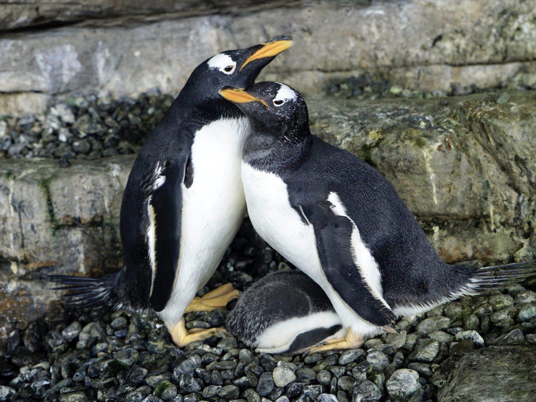 viola y electra pinguinas lesbianas oceanografic